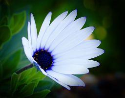Macro – Flowers